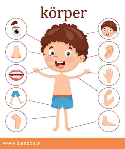 اعضای بدن در آلمانی | آموزش زبان آلمانی بامبو