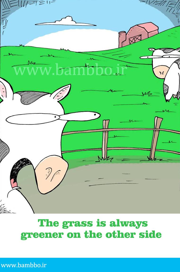 ضرب المثل انگلیسی مرغ همسایه غازه|بامبو
