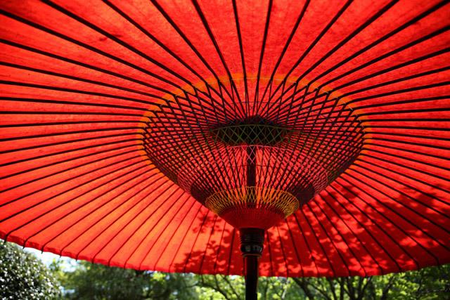 ترجمه مقالات انگلیسی| کشور چین|بامبو